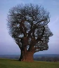 imagination-tree